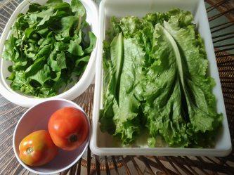 Alface, Rúcula e Tomate